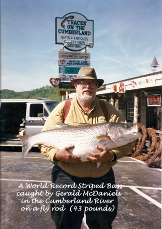 World Record Striped Bass caught by Gerald McDaniels in the Cumberland River on a fly rod.